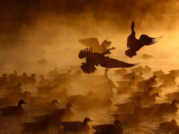aquatic-canada-geese.jpg?w=630