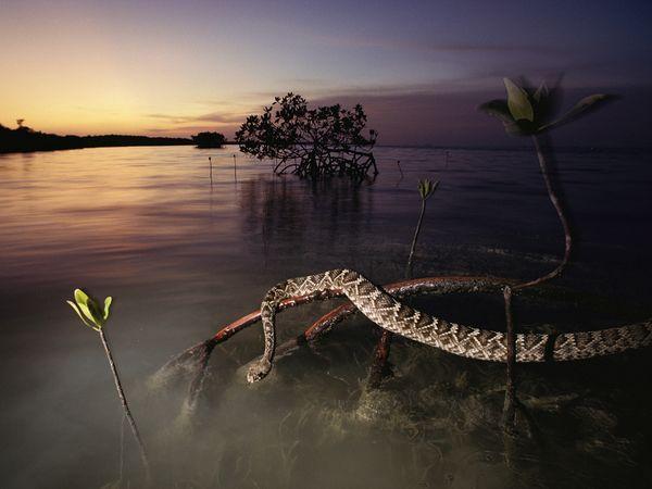 aquatic-diamondback-rattlesnake.jpg?w=63