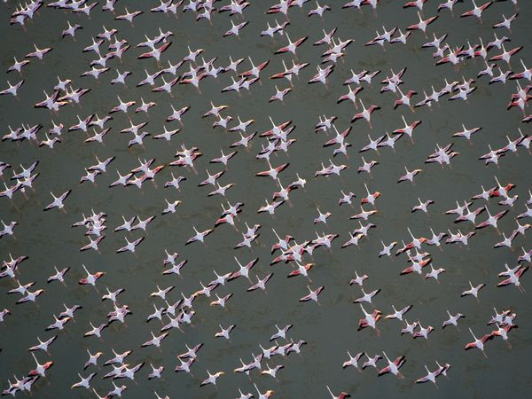 aquatic-flamingos-ethiopia.jpg?w=630