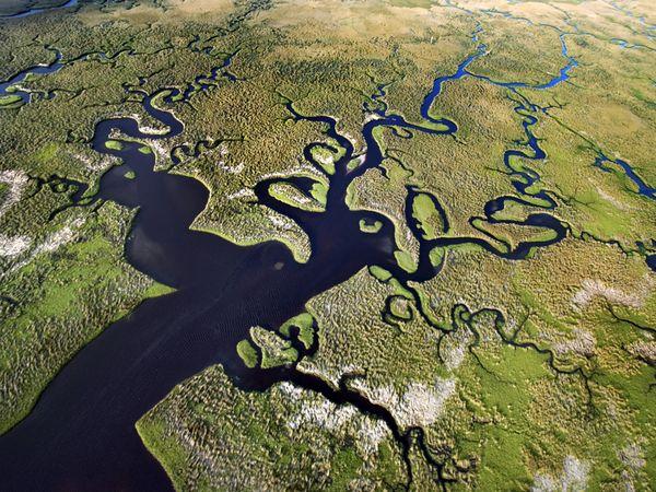 aquatic-florida-everglades.jpg?w=630