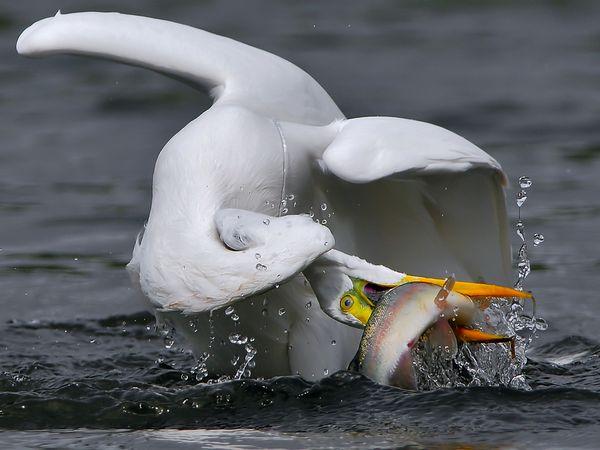 aquatic-great-egret.jpg?w=630