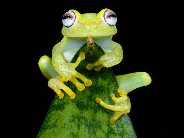 aquatic-treefrog-peru.jpg?w=630