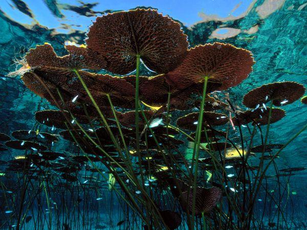 aquatic-water-lillies.jpg?w=630