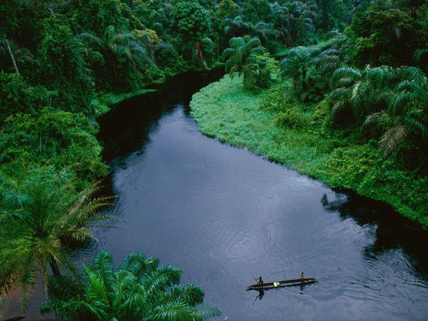National Geographic: ტროპიკული ტყეების ფოტოგალერეა