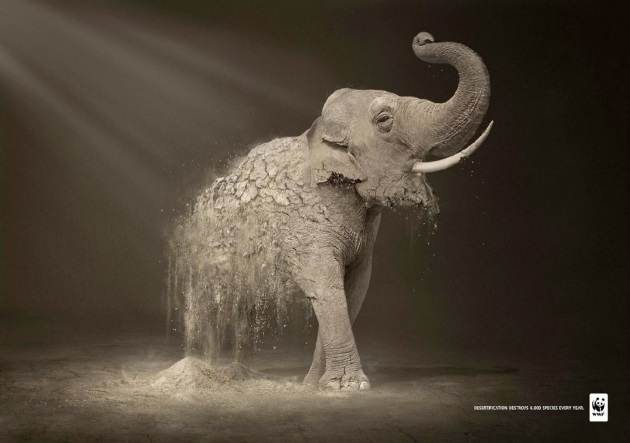 wwf_elephant.jpg?w=630&h=443