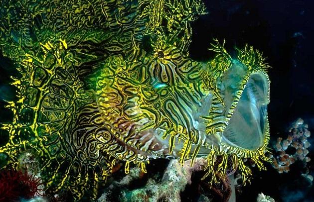 merlet_s-scorpionfish.jpg?w=630