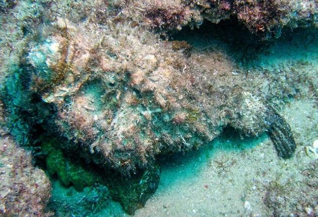 reef-stonefish.jpg?w=630