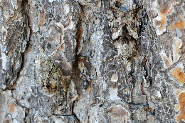 underwing-moth.jpg?w=630